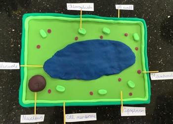 Fantastic Science Projects at home!